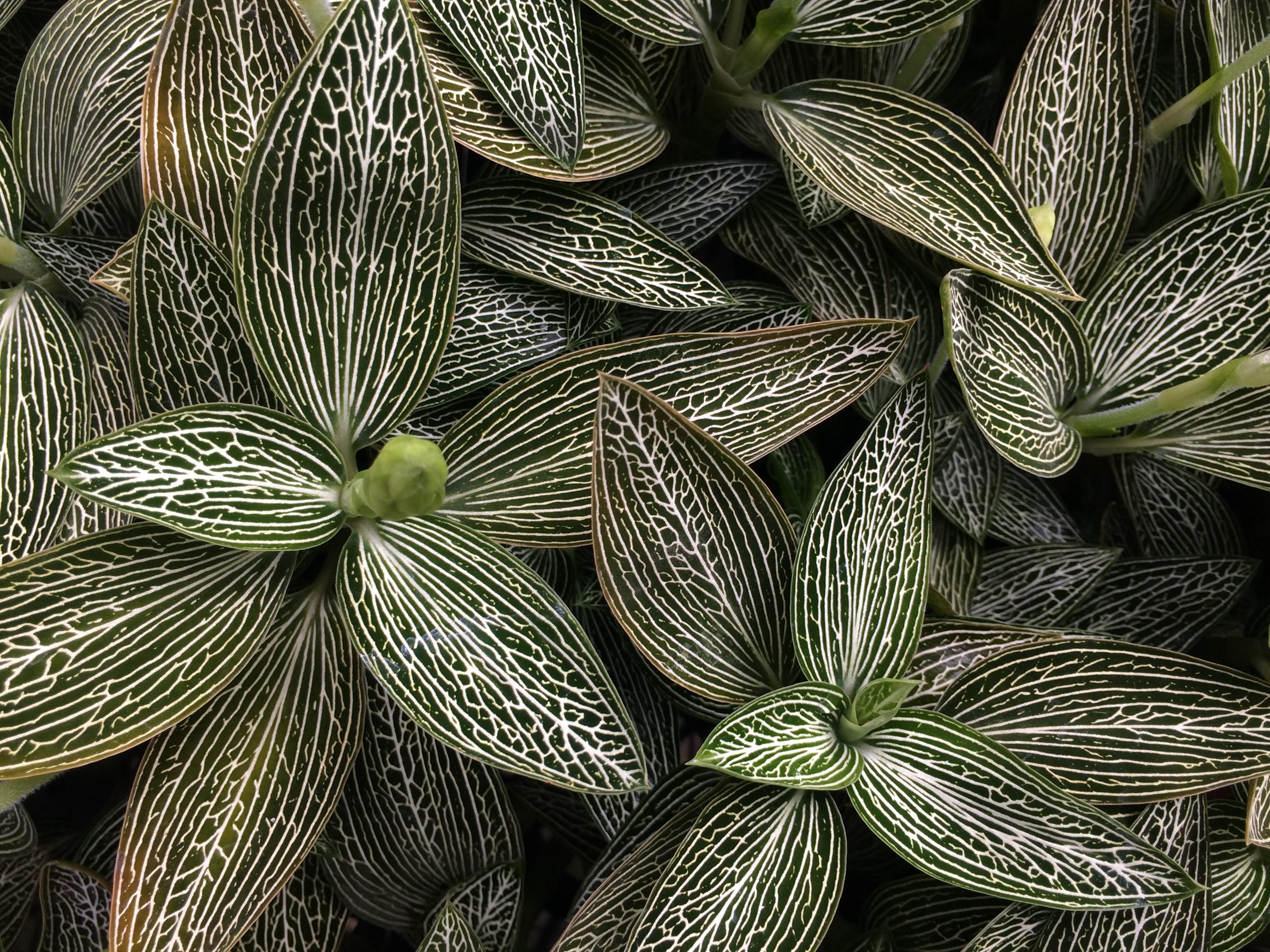 観葉植物市「緑の売店」開催のお知らせ